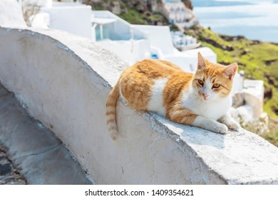 white and ginger mixed stray cat in Oia on Santorini
