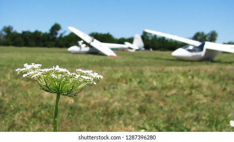 White gliders in the background