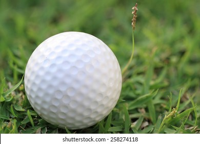 White golf ball on course green grass field background