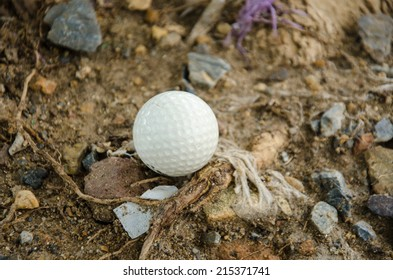 white golf ball on the rock and tree
