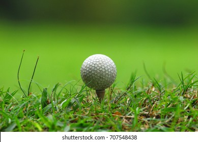 White Golf ball at  Tee off on a green grass at a Golf course