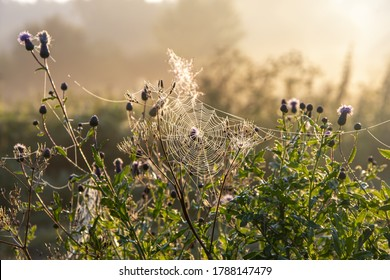 White gossamer with drops of morning dew at sunrise in the field, morning landscape in the meadow.