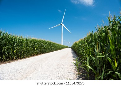 A white gravel road leading through corn fields to windmills in Iowa.
