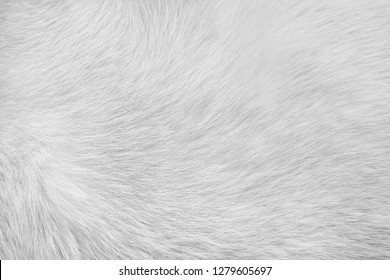 white or gray cat fur texture for background,Natural animal patterns skin