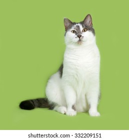 White and gray spotted cat sitting on green background
