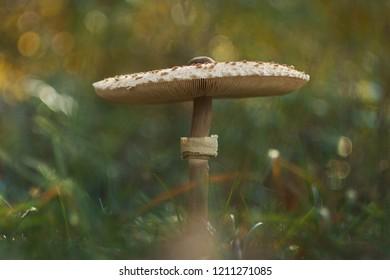 Hallucinogenic Plants Images, Stock Photos & Vectors