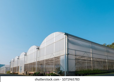 White green house on blue sky background. Plants crop in greenhouse.