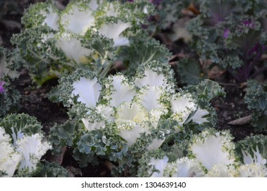 White and green plants