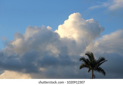 white and grey clouds with blue sky and a palm tree