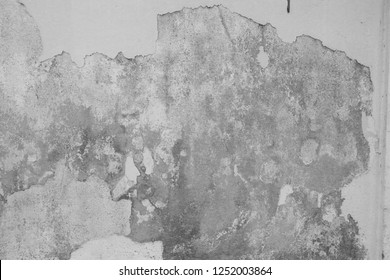White  grey old  wall with shabby damaged plaster Cement and brick background of an vintage dirty exfoliating plaster  Textured background peeling of colour wallpaper cement pealing
