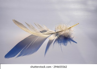 White grey soft empty background with light striped down feather with beautiful shadow
