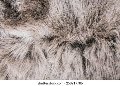 White Grey Wolf Fox Fur Natural, Animal Wildlife Concept and Style for Background, textures and wallpaper. / Close up Full Frame.