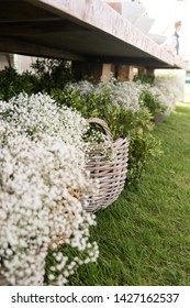 White gypsophila on any holiday beautiful and delicate decor. Wedding or party. Baby's breath flowers in woven basket baskets.