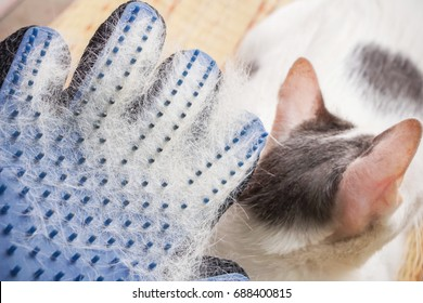white hair cat loss on grooming gloves after brush