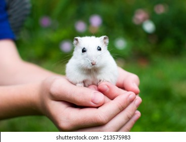 white hamster with black eyes sitting in the children's hands and looking into the camera with a blurred green background