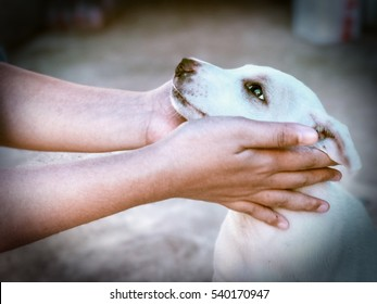 White happy dog play with love