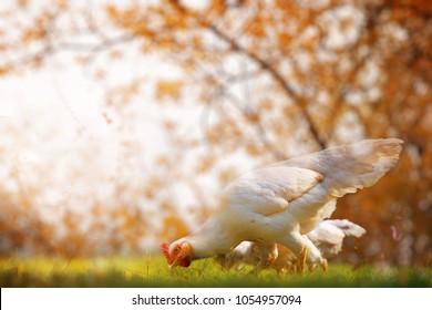 Animals Antibiotics Images, Stock Photos & Vectors