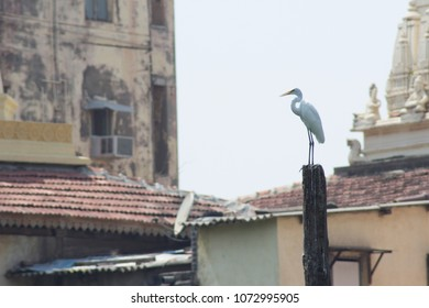 white heron standing on tower