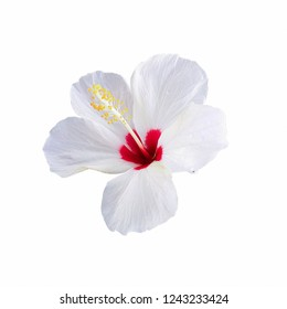 A white hibiscus flower isolated against a white background
