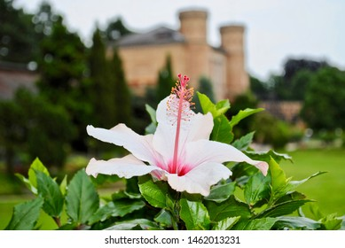 White hibiscus flower with pink stamen. In the background are castle like towers of the Botanical Garden Gatehouse of the Karlsruhe Palace gardens and park.