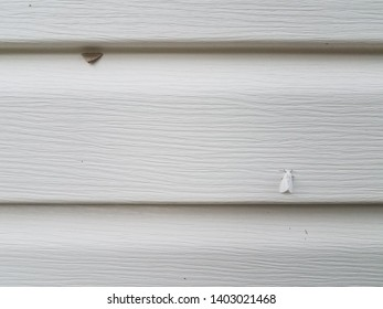 white home siding with white and brown moths