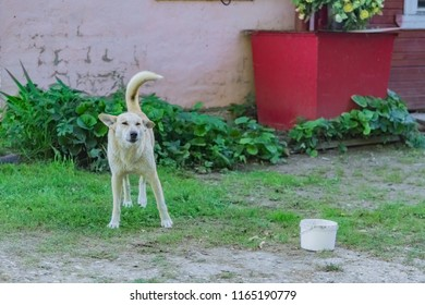 White homless stray dog on the street