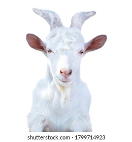 white horned goat with a beard on a white background