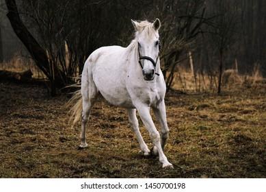 White horse in autumn scene