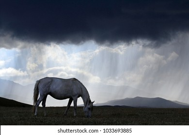 White horse in bad weather at Song Kol Lake, Central Kyryzstan