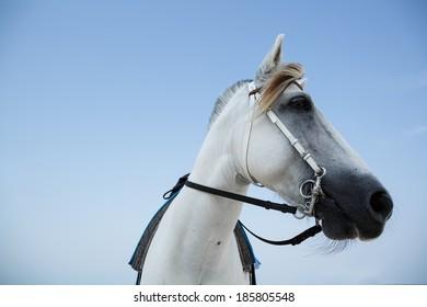 White horse at Beach , Thailand