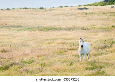 White horse in a beautiful landscape with copy space