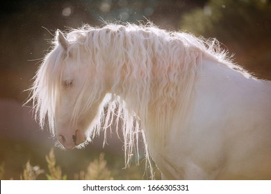 white horse with a beautiful long mane