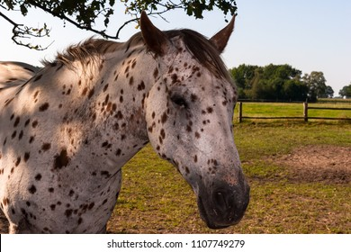 White horse with black dots on a green meadow