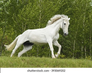 white horse with blond mane and black eyes on the green background