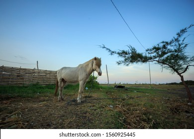 White Horse with blue skys background