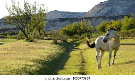 A white horse with brown tail is posing by the way. The surface is full of grass with some médium shrubs and small mountains behind.