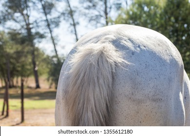White horse butt outdoors close up - horizontal photo of horse rear end