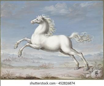 White Horse, by Joris Hoefnagel, 1560-99, Flemish painting, gouache on parchment. Hoefnagel was the last important Flemish manuscript illuminator. He also created a multi-volume book of natural histo