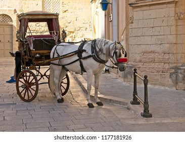 White horse and carriage in an old town