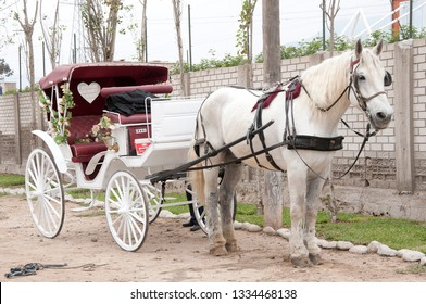 White horse and cart used for wedding transportation