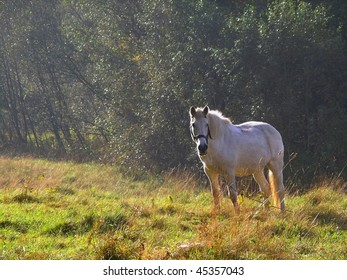 white horse with chain