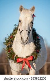 White horse with christmas wreath