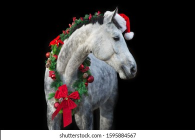White horse in christmas wreath and red santa hat. New Year and Christmas horse