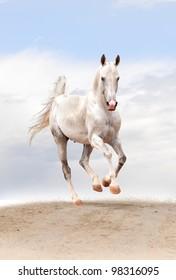 white horse in a desert