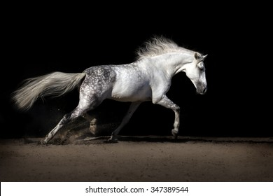 White horse in desert dust
