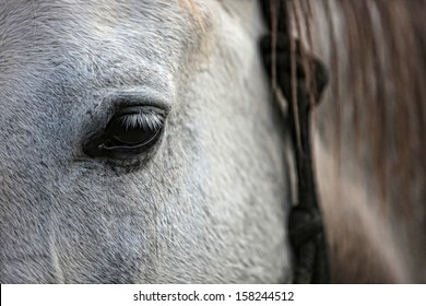 White horse detail selective focus