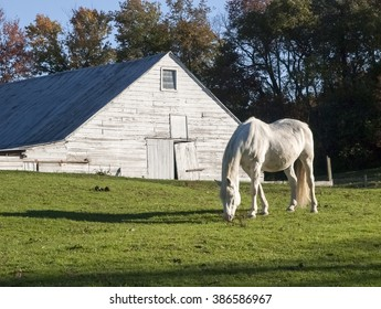 White Horse and Dutch Barn, Hudson Valley, New York