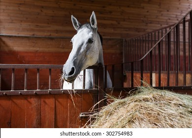 White horse eating hay in the stable
