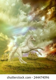 white horse in the field in stormy day