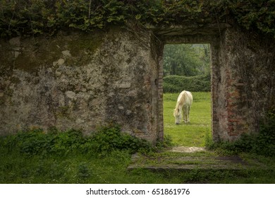 A white horse framed in a stone wall doorway grazing in a lush green field.